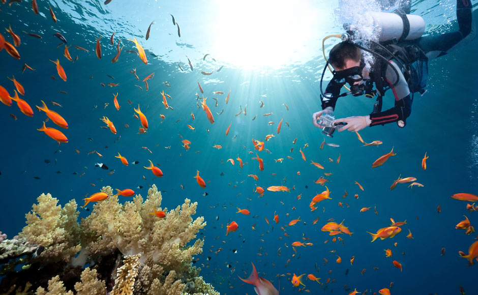 attractions_diving